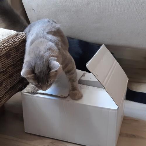 cat1_5b80953901b53.jpg
