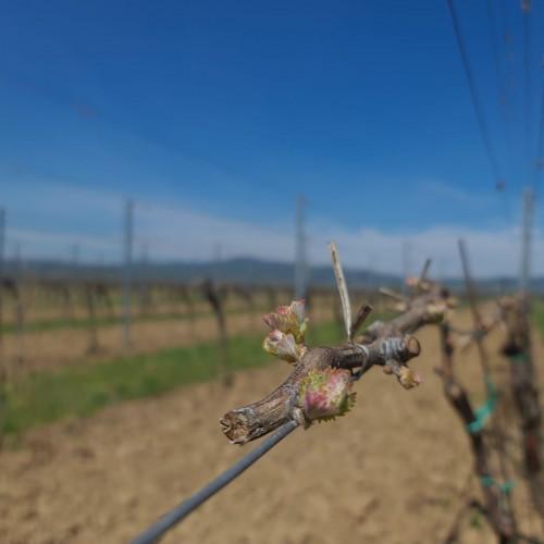 Jar vo vinohradoch