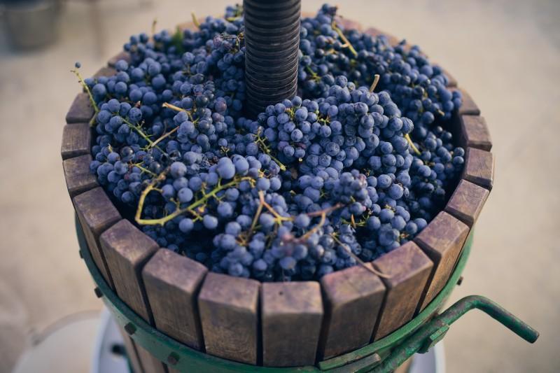 Program degustácií vína s Vladimírom Hronským